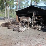 Этнографическая экспедиция на стойбище